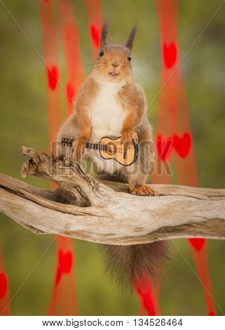red squirrel with guitar looking in the lens