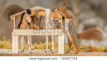 close up of red squirrels between horses in a stable