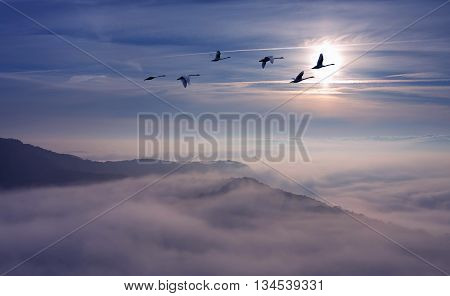 Flock of cranes spring migration over sunset landscape