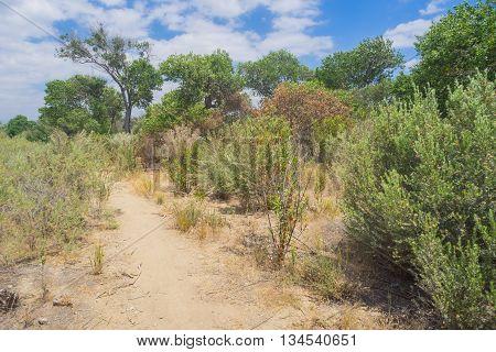 Mojave Desert Brush
