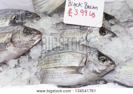 Whole black bream fish on ice, closeup