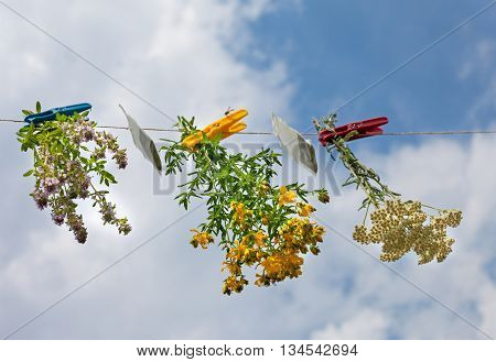 Herbs and teabags with clothespin hanging on the line