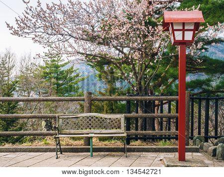 Empty Park Bench Underneath Cherry Blossom Tree