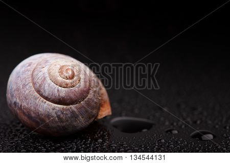 spiral snail shell on black mirror surface abstract macro photo