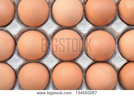 Closeup organic fresh chicken egg for food ingredient