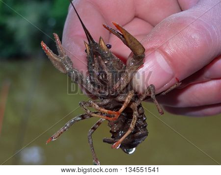 man holding a crayfish on the background of the lake