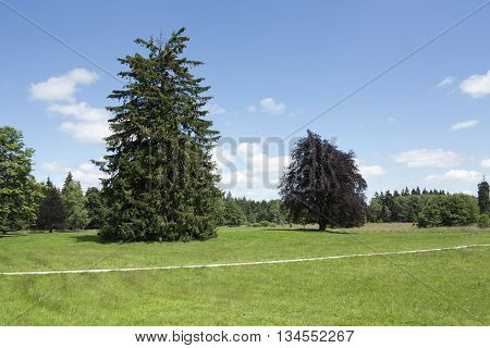 Meadow and tree - sunny day in the park