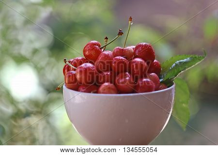 Picture of  Fresh red  cherries in bowl