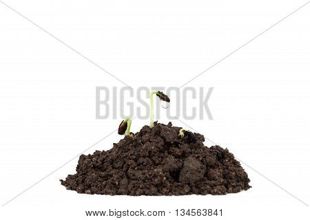 young plant on soil with drop water on white background