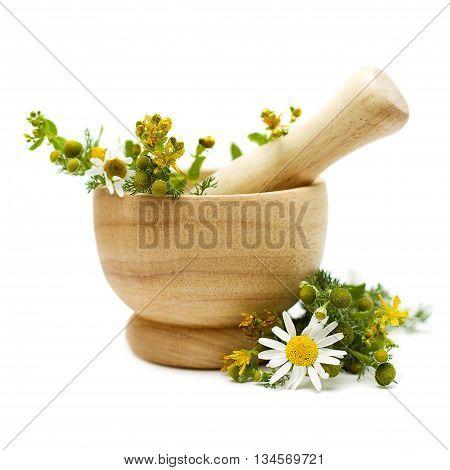 Chamomile and tutsan (Saint-John's-wort) medicine herbs on white