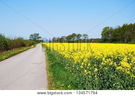Narrow country road in a bright spring landscape