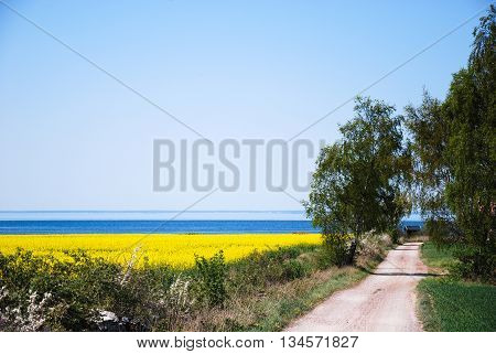 Gravel road to the coast through a bright rural landscape