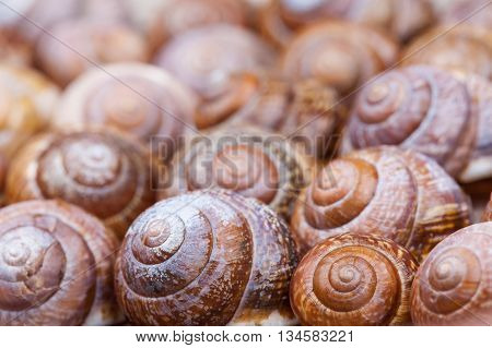 many spiral shells of snails abstract photo