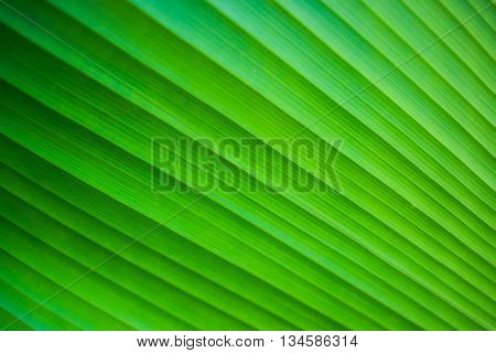 Green leaf nature abstract background and texture