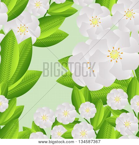 Jasmine flowers seamless pattern, print, wrapping paper, plant