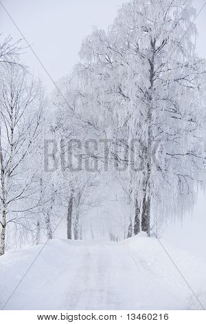 Dirt Road At Winter