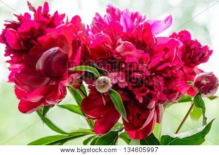 Pink And Purple Peony Bunch In Vase