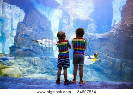 Two little kid boys observing penguins in a recreation area. Cute siblings, preschool children having fun with watching animal life.