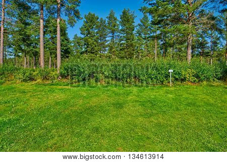 Sunny Vacant Campsite Pitch with Grass and Pine Forest in the Background