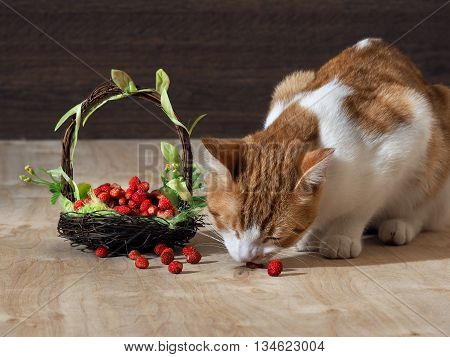 The cat eats wild strawberry. Unusual food for cats. Beautiful small decorative basket with strawberries. Basket decorated with flowers and green leaves. Background wooden board