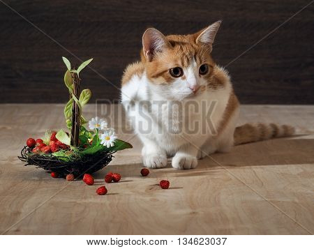 Still - nice cat and a small decorative basket with wild strawberry. On the basket decorated with flowers and green leaves. Background wooden board