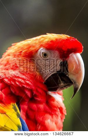 Close Up View At Macaw