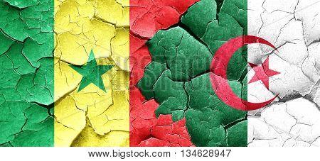 Senegal flag with Algeria flag on a grunge cracked wall
