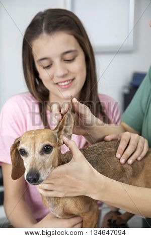 Cropped Image Doctor Examining Dachshund's Ear By Girl