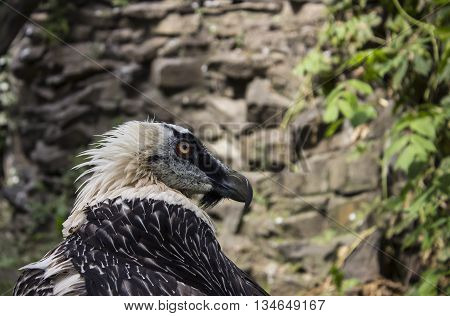 Photo big bearded bird in a zoo