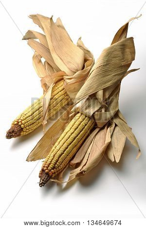 Two Mature maize ears isolated on white
