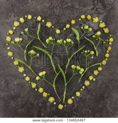Cute heart symbol made of yellow linden flowers. Flat lay top view on stone background