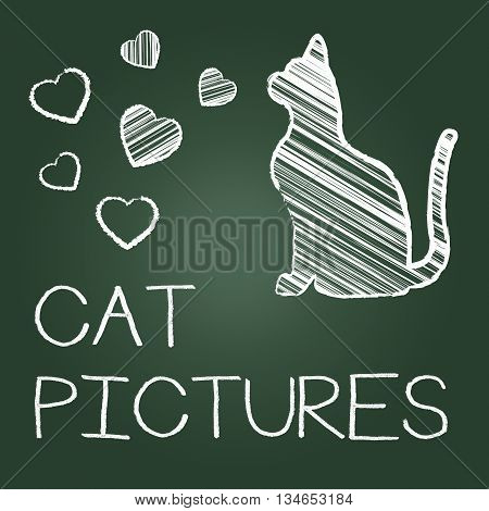 Cat Pictures Means Photos Pet And Image