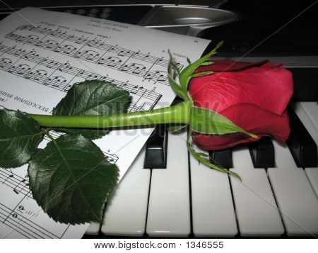 Rose Piano Music Loves