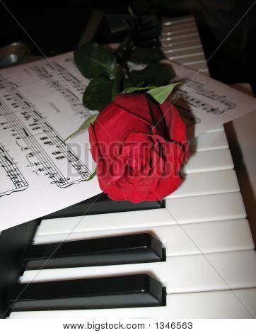 Rose Piano Music