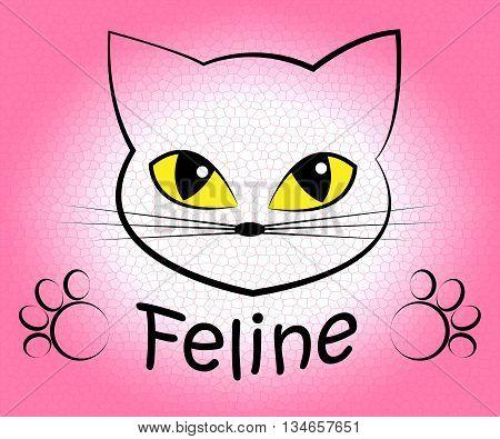Feline Cat Means Pets Pet And Felines