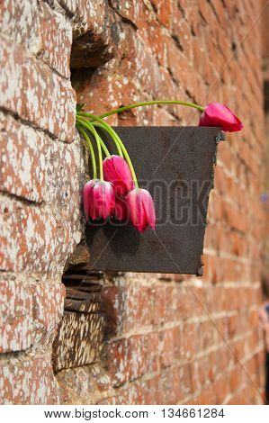 Bouquet of tulips in the brick wall niche