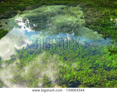 Holy spring with transparent water near Tirtha temple, Bali