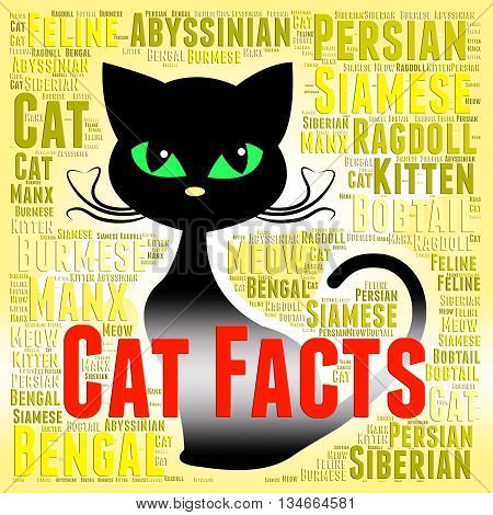 Cat Facts Shows True Knowledge And Puss