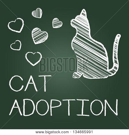 Cat Adoption Shows Kitten Pet And Adopting