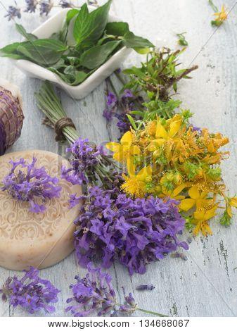 fresh herbs cosmetics, St John;s wort and lavender