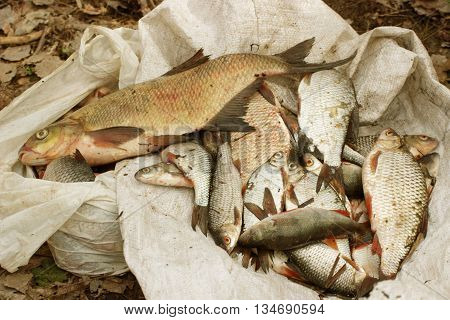 different fish caught the fisherman in the river lying on the bag.