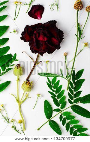 Herbarium Of Field Of Wild Foliage