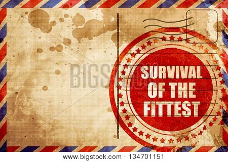 survival of the fittest, red grunge stamp on an airmail backgrou