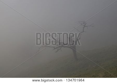 Lonesome tree in mist and meadow in autumn