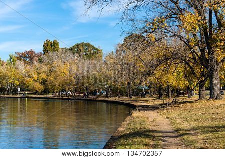 Autumn in Bowen park Canberra Australia. Urban park with yellow trees and pedestrians paths in fall season