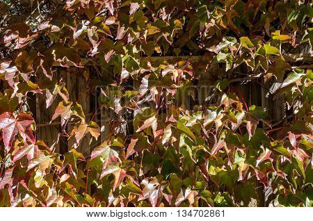 Autumn leaves texture. Fall foliage nature background wallpaper