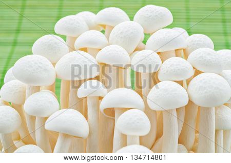 Close up White beech mushrooms Shimeji mushroom Edible mushroom on green bamboo mat background.