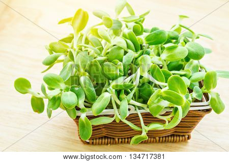 Organic green young sunflower sprouts in weave basket on wooden background.