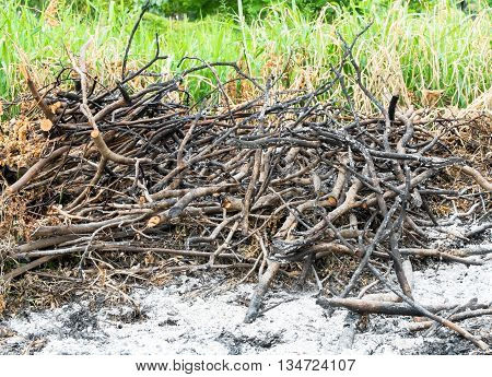 Grass And Branch Burned Area In Waste Lands