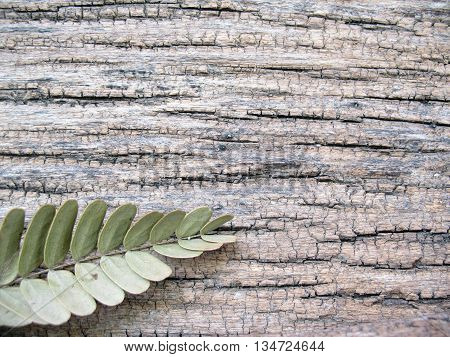 dried leafs tamarind on old  wooden background